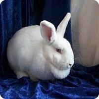 Adopt A Pet :: Mya - Woburn, MA