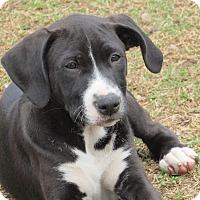 Adopt A Pet :: Ellie (Socks) - Broken Arrow, OK