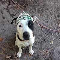 Adopt A Pet :: Alisha - Groveland, FL