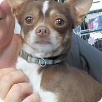 Adopt A Pet :: Ammo - Waupaca, WI
