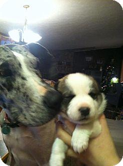Labrador Retriever Mix Puppy for adoption in Alliance, Nebraska - maggie's girls