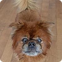 Adopt A Pet :: Roucky - Montreal, QC