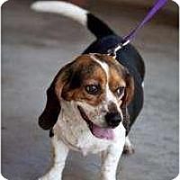Adopt A Pet :: Pony - Phoenix, AZ