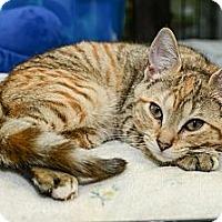 Adopt A Pet :: Else - New York, NY
