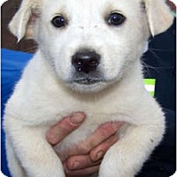 Adopt A Pet :: GLACIER - Wakefield, RI