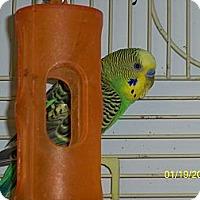 Adopt A Pet :: Vardon - Lenexa, KS