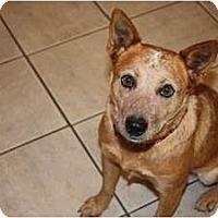 Adopt A Pet :: Annie - Oklahoma City, OK