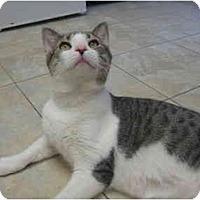 Adopt A Pet :: Arthur - Deerfield Beach, FL