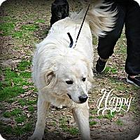 Adopt A Pet :: Happy - Vancleave, MS
