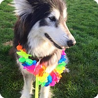 Adopt A Pet :: Odessa ♥ - Livonia, MI
