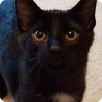 Adopt A Pet :: Khleesi - McHenry, IL