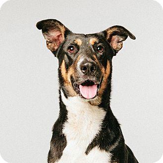 Shepherd (Unknown Type) Mix Dog for adoption in Houston, Texas - Peet