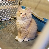 Adopt A Pet :: Patterson - Geneseo, IL