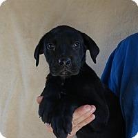 Adopt A Pet :: Saga - Oviedo, FL