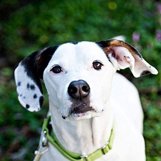 Basset Hound Mix Dog for adoption in Houston, Texas - Nylon