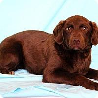 Adopt A Pet :: Isoka - Waldorf, MD