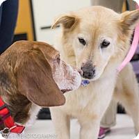 Adopt A Pet :: Gertie - Grand Rapids, MI