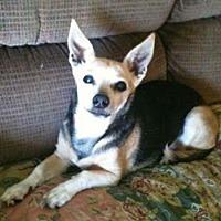 Adopt A Pet :: Bucky - Arcadia, FL