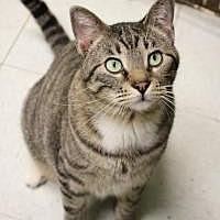 Adopt A Pet :: Jerry - Yukon, OK