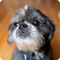 Adopt A Pet :: Art Garfunkel - Brooklyn, NY