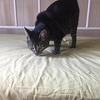 Adopt A Pet :: Milo - Yardley, PA