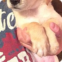 Adopt A Pet :: Graham - Louisville, KY