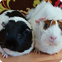 Adopt A Pet :: Lupe & Lucy - Brooklyn Park, MN