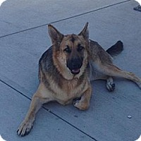 Adopt A Pet :: Stonzie - Lake Forest, CA