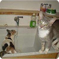 Adopt A Pet :: Barkley - Pasadena, CA