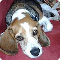 Adopt A Pet :: Sammie - Canoga Park, CA