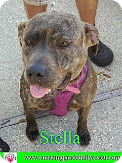 American Pit Bull Terrier/Plott Hound Mix Dog for adoption in Pensacola, Florida - Stella