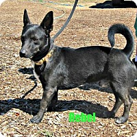 Adopt A Pet :: Rebel - Yreka, CA