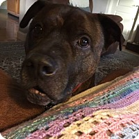 Adopt A Pet :: Coco 2 (COURTESY POST) - Baltimore, MD