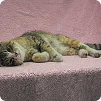 Adopt A Pet :: Sophia - Redwood Falls, MN