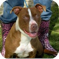 Adopt A Pet :: Ms. Ruby - Sacramento, CA