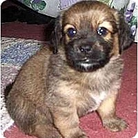 Adopt A Pet :: Mr. Tucker - Mays Landing, NJ