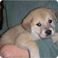 Adopt A Pet :: Gable - Albany, NY