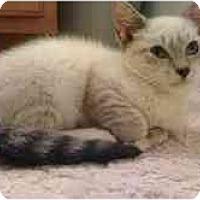 Adopt A Pet :: Sushi - Arlington, VA