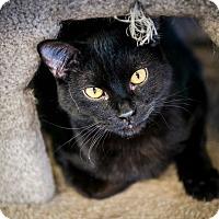 Adopt A Pet :: Binx - Cody, WY