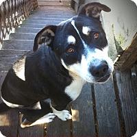 Adopt A Pet :: Hank - San Francisco, CA