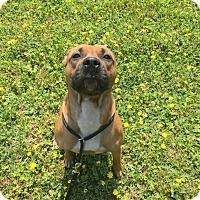 Adopt A Pet :: Chevy - Acushnet, MA