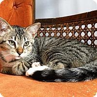 Adopt A Pet :: Polly - Nolensville, TN
