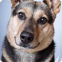 Adopt A Pet :: Doro - Norman, OK