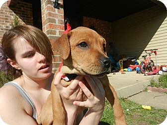 Labrador Retriever Mix Puppy for adoption in South Jersey, New Jersey - Ginger