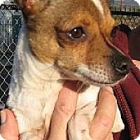 Adopt A Pet :: Rosie - Sun Valley, CA