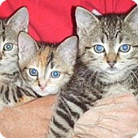 Adopt A Pet :: Timmy, Tommy and Dotty - Kensington, MD