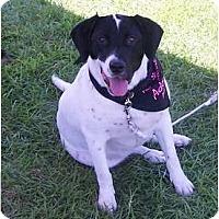Adopt A Pet :: Annie - Little River, SC