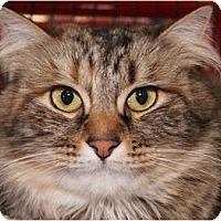 Adopt A Pet :: Cleo - San Ramon, CA