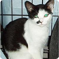 Adopt A Pet :: Rascal - Westfield, MA