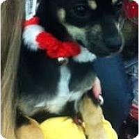 Adopt A Pet :: Beckie - Oceanside, CA